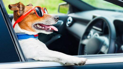 prawo jazdy w anglii