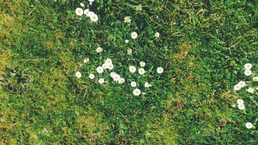 Pierwszy dzień wiosny w Irlandii – Imbolc