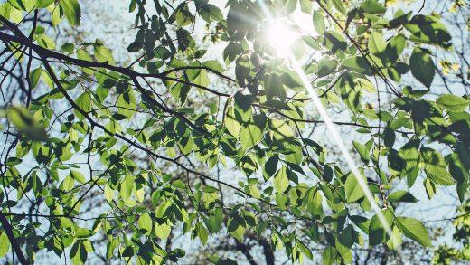 Boże Ciało i Late May Bank Holiday – zmiana terminów realizacji przelewów