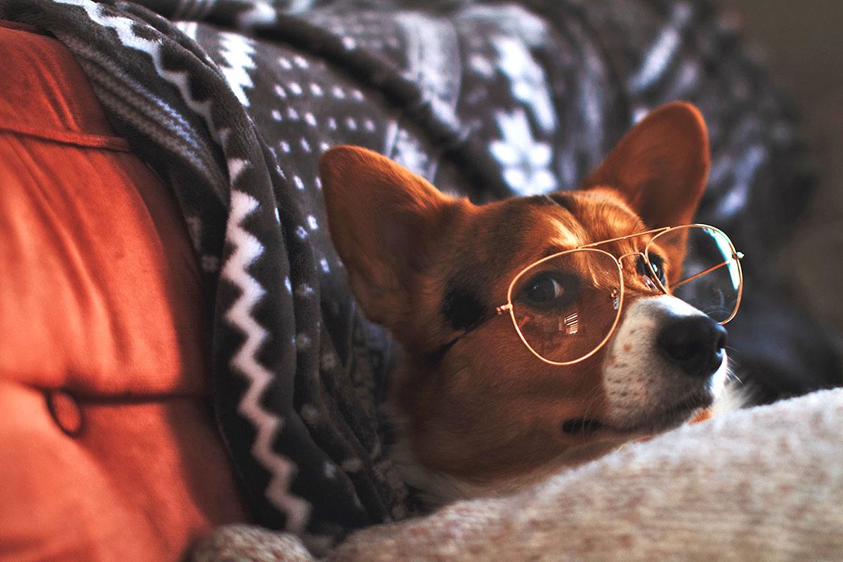 okulary uk voucher