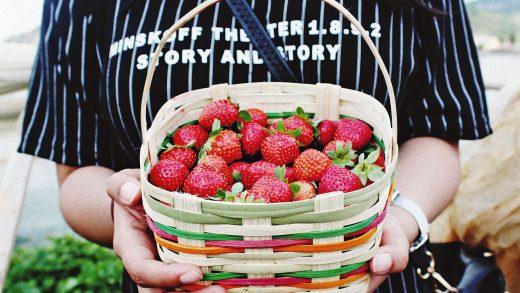 zbir fruktiv v polshi